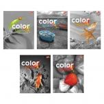 Bradley kaustik 48 lehega  ruuduline Color splash