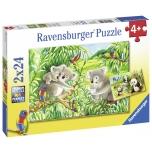 Ravensburger pusle 2x24 tk Koalad ja pandad 4+