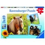 Ravensburger pusle 3x49 tk Hobused 5+