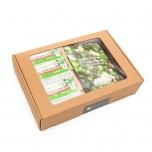 RemedyWay Toortatra stardipakk EST retseptiraamatuga (aknaga karbis)